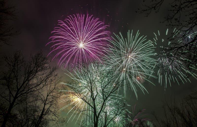 Fuochi d'artificio nel cielo sopra gli alberi immagine stock libera da diritti