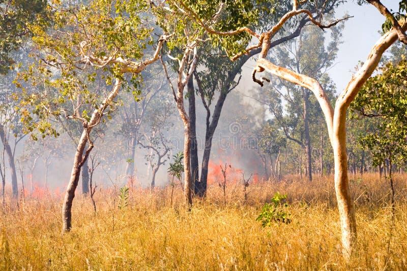 Fuoco del Bush nell'entroterra Australia fotografia stock libera da diritti