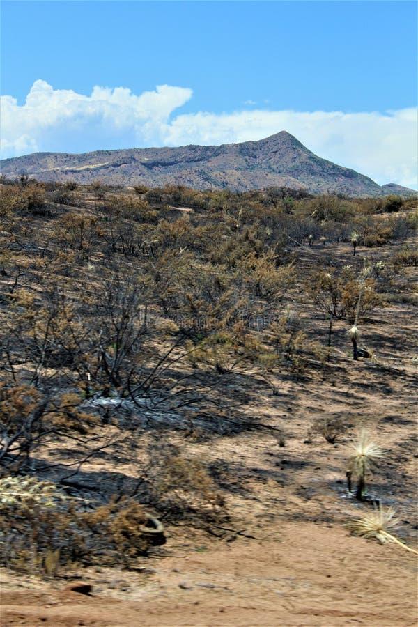 Fuoco della montagna a Bartlett Lake Reservoir, foresta nazionale di Tonto, la contea di Maricopa, stato dell'Arizona, Stati Unit immagine stock