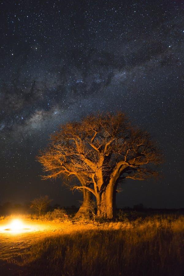 Fuoco di accampamento in corso gli alberi del baobab e la Via Lattea fotografia stock libera da diritti