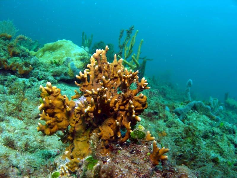 fuoco di corallo fotografie stock