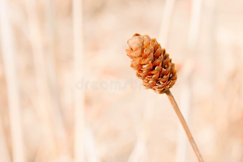 Fuoco fondo-morbido all'aperto d'annata della molla della natura dei fiori fotografia stock