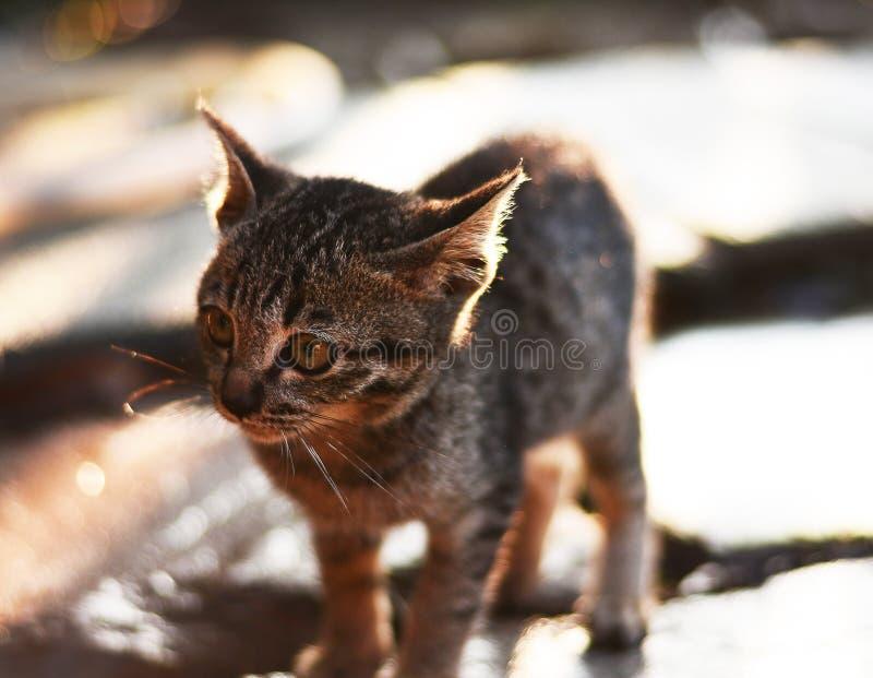 Fuoco scelto del gatto dell'occhio fotografia stock