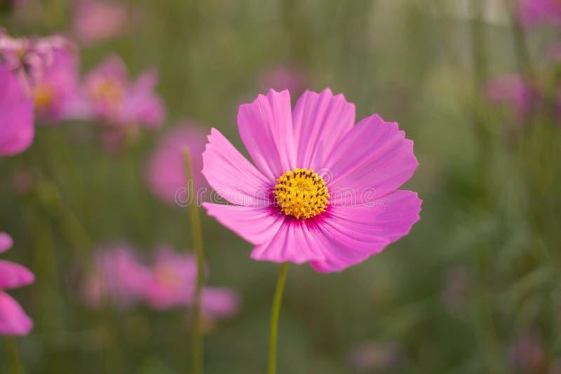 Fuoco selettivo del fiore immagini stock libere da diritti