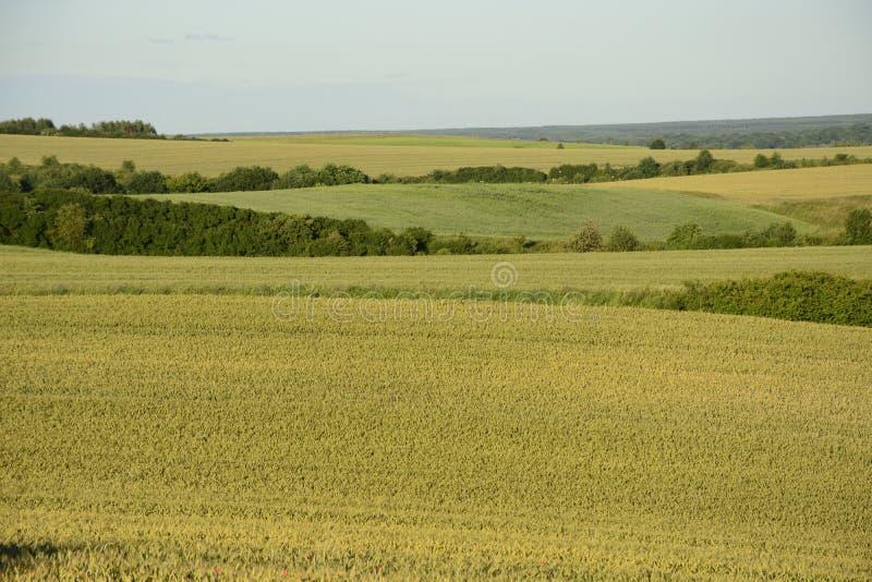 Fuori della città - paesaggio rurale - un campo immagini stock libere da diritti