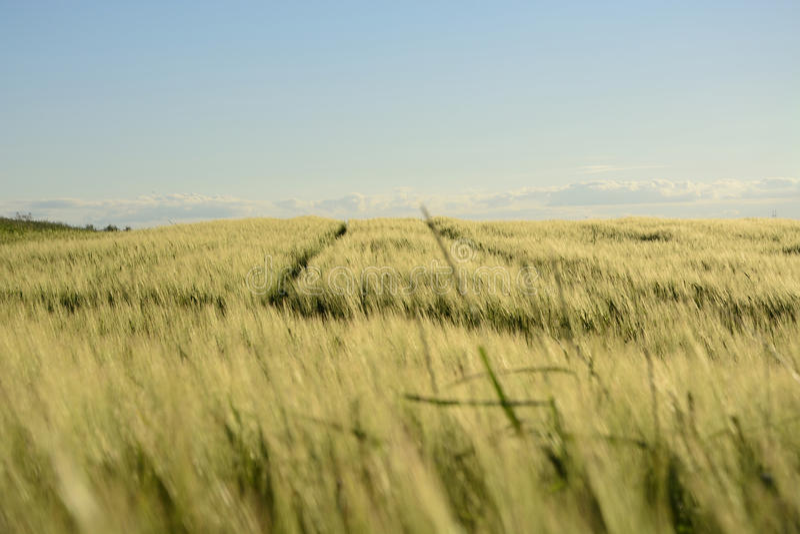 Fuori della città - paesaggio rurale - un campo fotografia stock libera da diritti