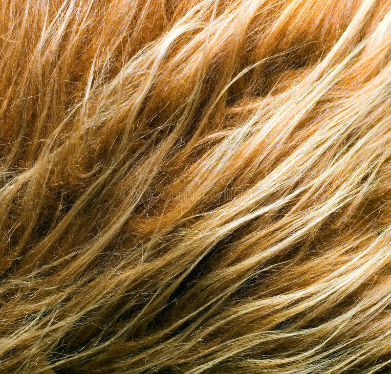 Fur. Red fox fur background texture royalty free stock image