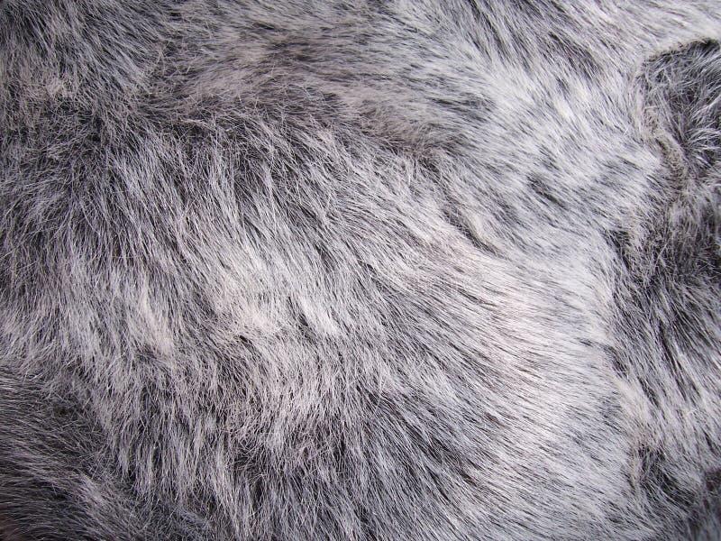 Download Fur stock image. Image of soft, comfort, backdrop, white - 305737