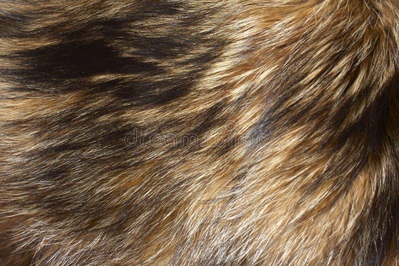 Fur background stock image