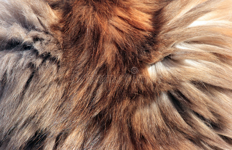 Fur background. Detailed background of cat fur with mixed colors royalty free stock photography
