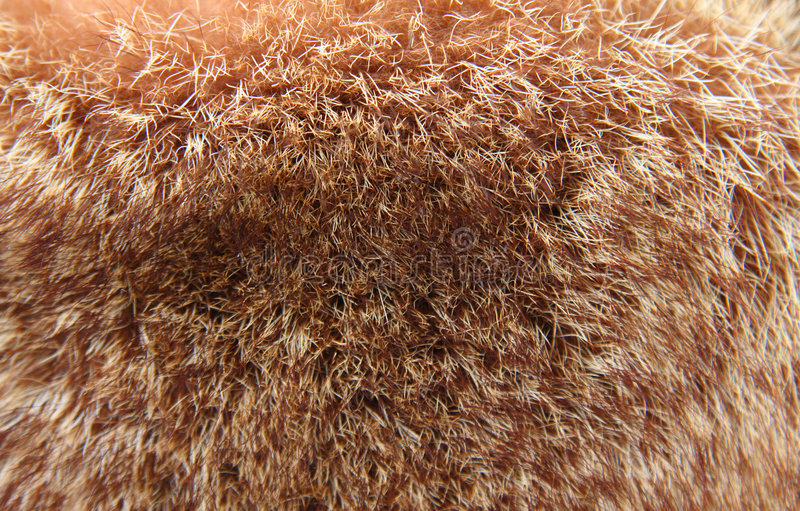 Download Fur background stock photo. Image of fluffy, season, black - 7261006