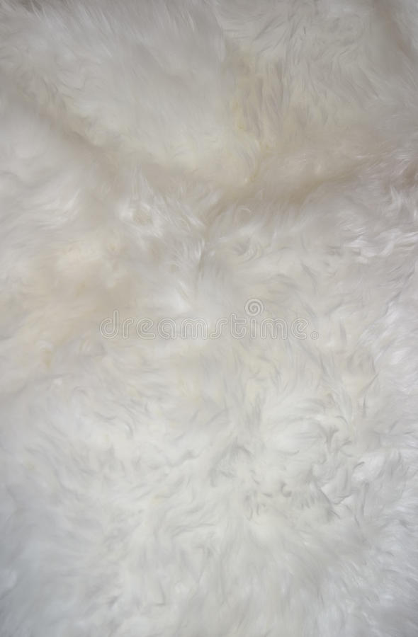 Fur backround. Fluffy white fur may be used as background stock image