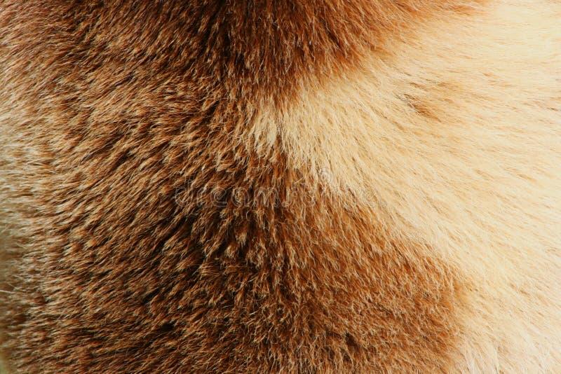 Download Fur Of Bear stock photo. Image of animals, animal, bovine - 25190116