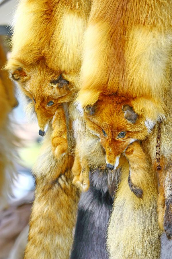 The fur of a fox which is on sale. In the market royalty free stock image