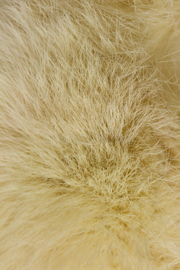 Download Fur stock image. Image of animal, abstract, close, wallpaper - 39502575