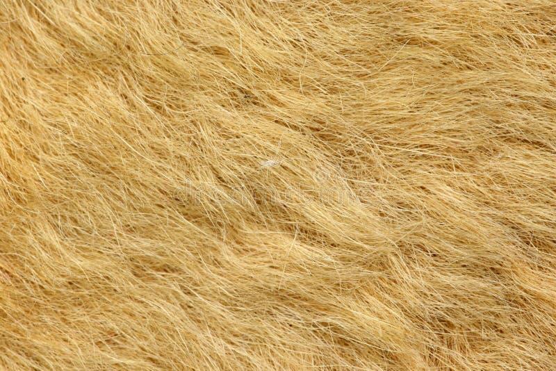 Fur on kangaroo rug stock photo