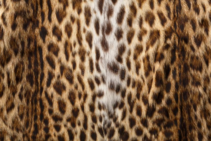 Fur with leopard print. Leopard skin pattern, textured background royalty free stock photography