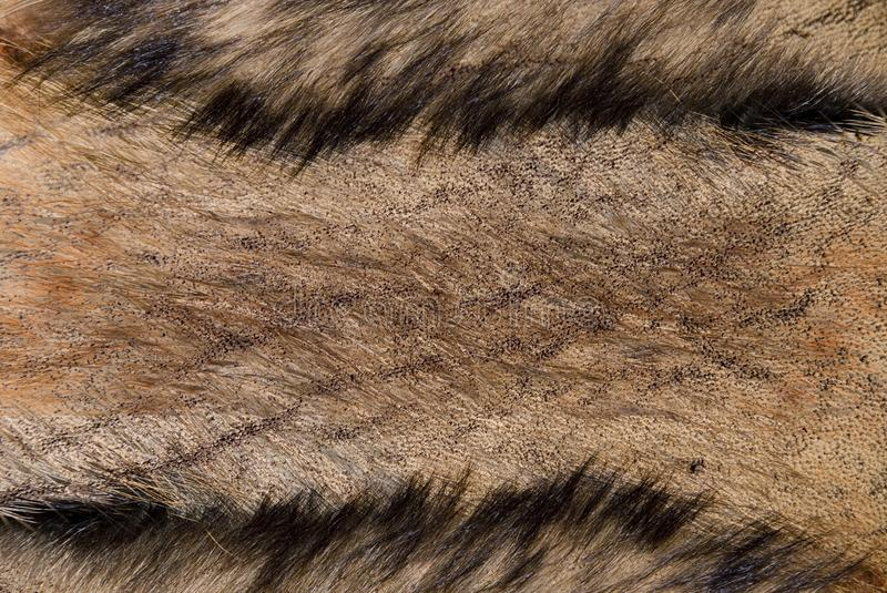 Fur and skin royalty free stock photo