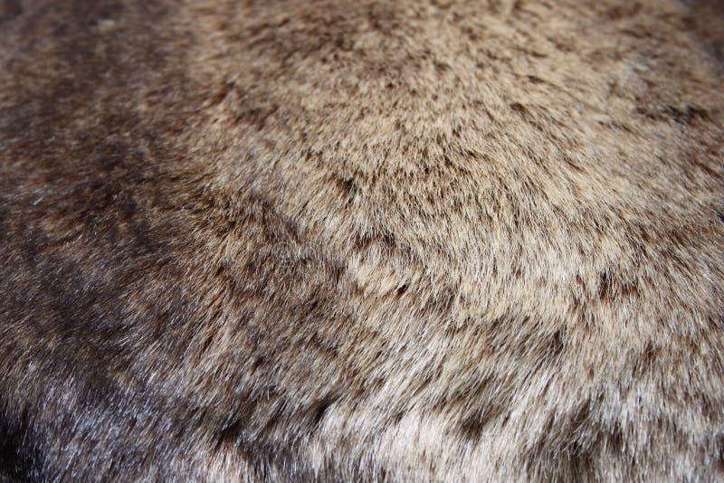 Fur texture stock photography
