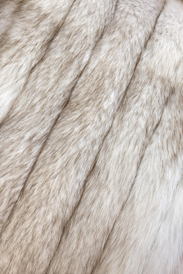 Download Fur texture stock photo. Image of animal, long, furry - 12444466