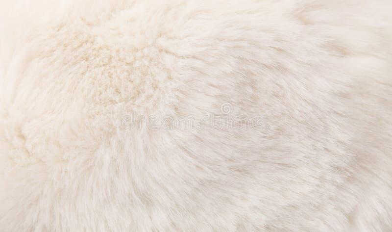 Fur texture stock image