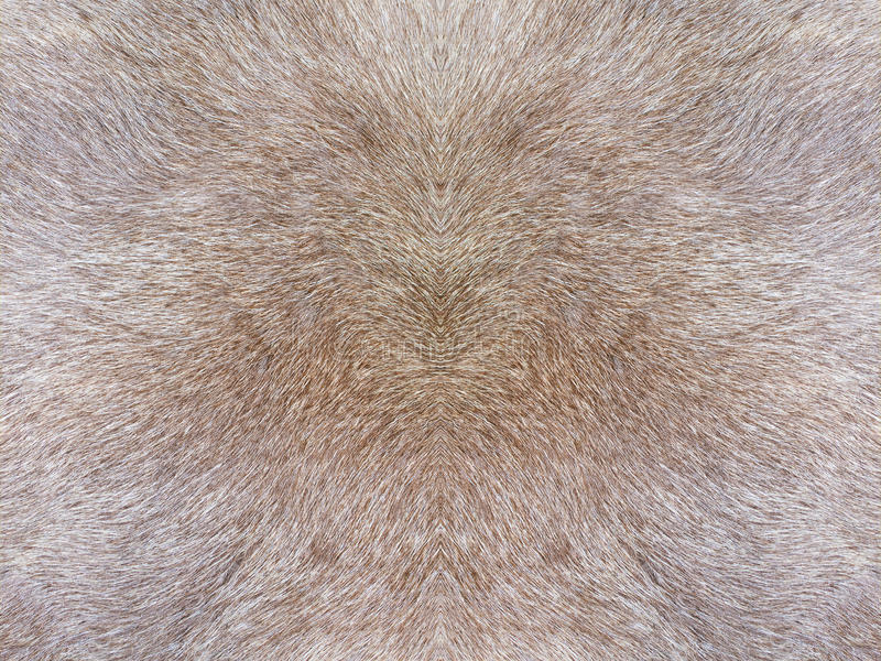 Fur texture royalty free stock photo