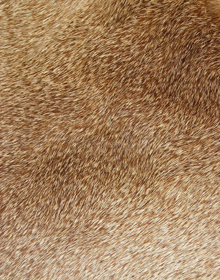 Free Fur Texture Stock Photo - 1854540