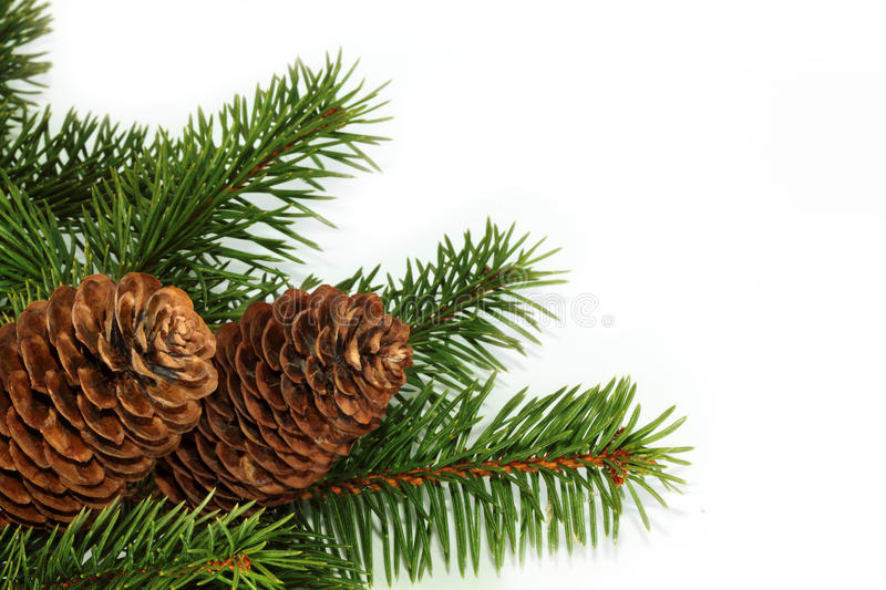 Download Fur-tree stock image. Image of natal, branch, evergreen - 16838133