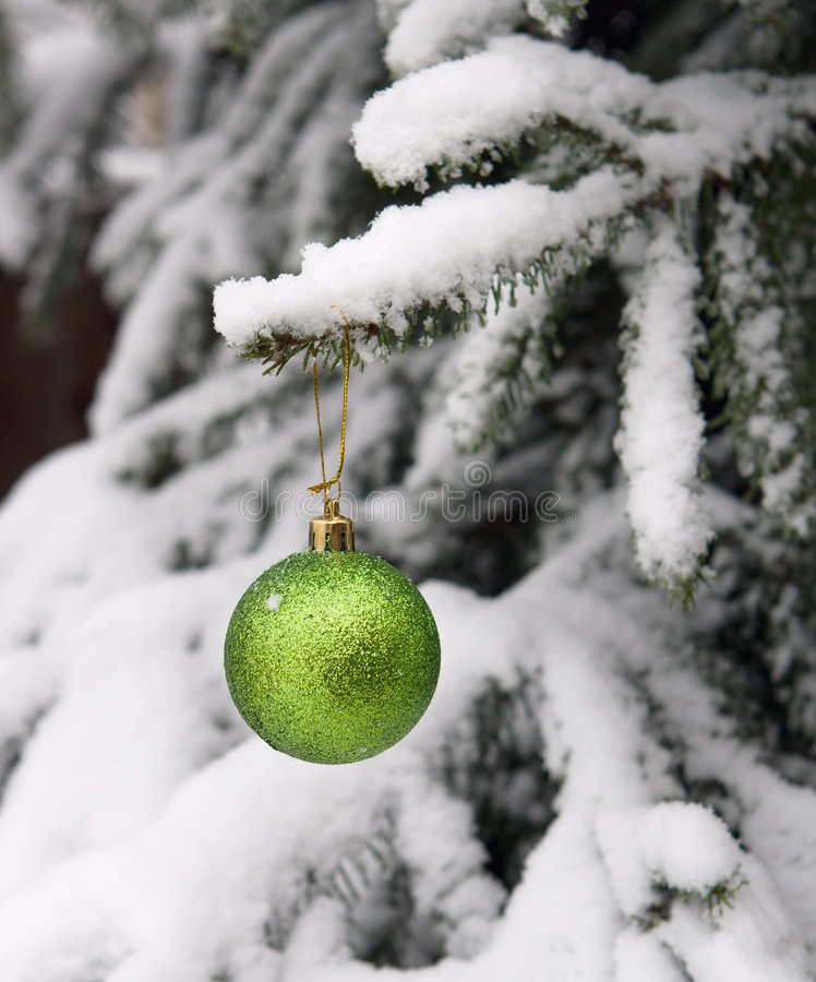 Fur-tree and a ball on a branch royalty free stock images