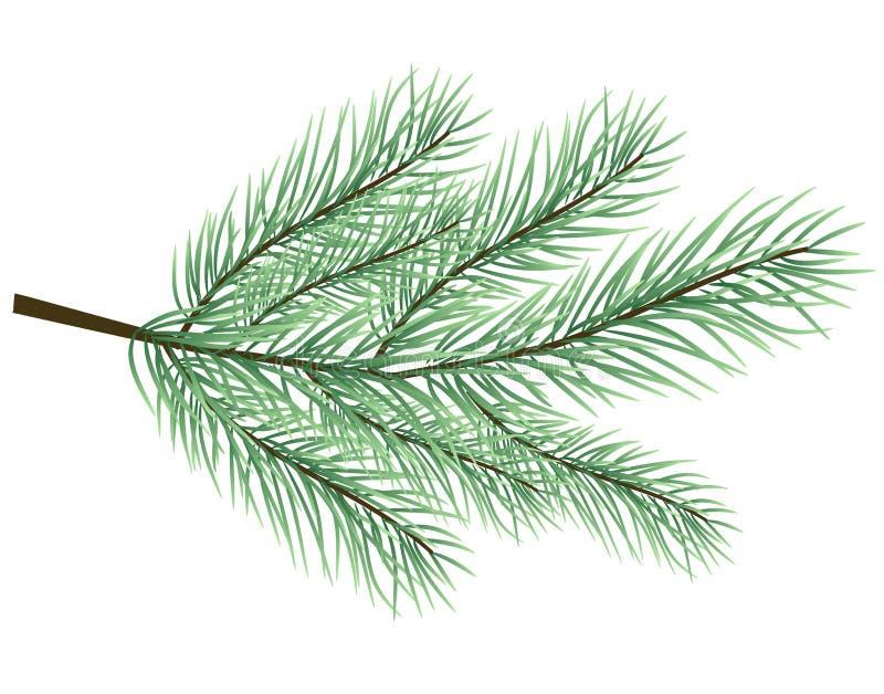 Fur-tree Branch Vector Royalty Free Stock Photo