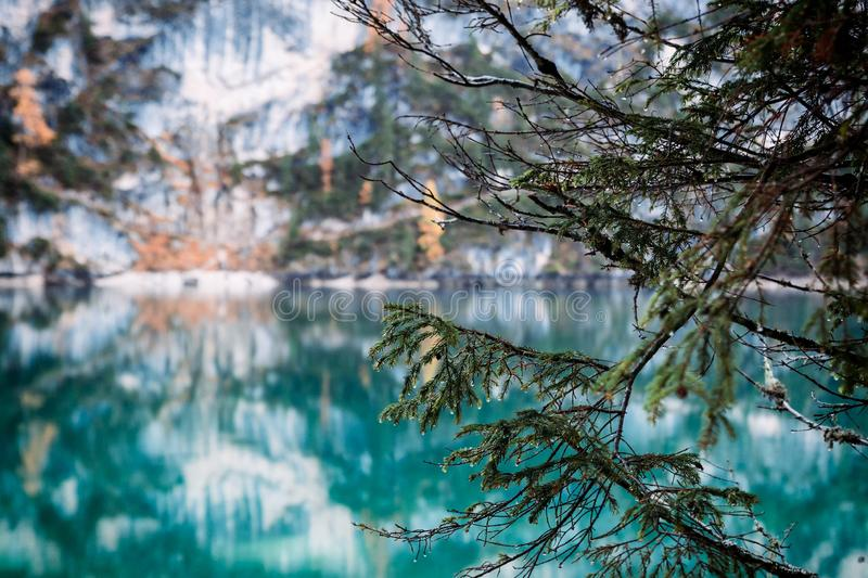 Fur tree branches and autumn scene at Lago di Braies with a beautiful lake reflections royalty free stock photo