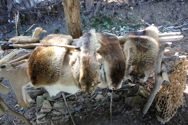 Fur which native americans used for clothing displayed at the Meadowcroft Rockshelter And Historic Village royalty free stock image