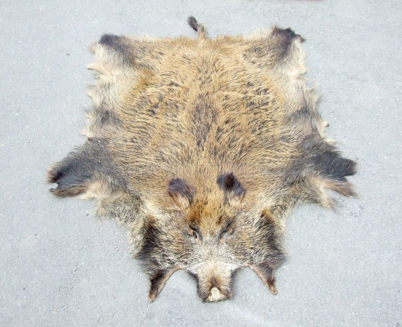 Fur of wild boar stock photo