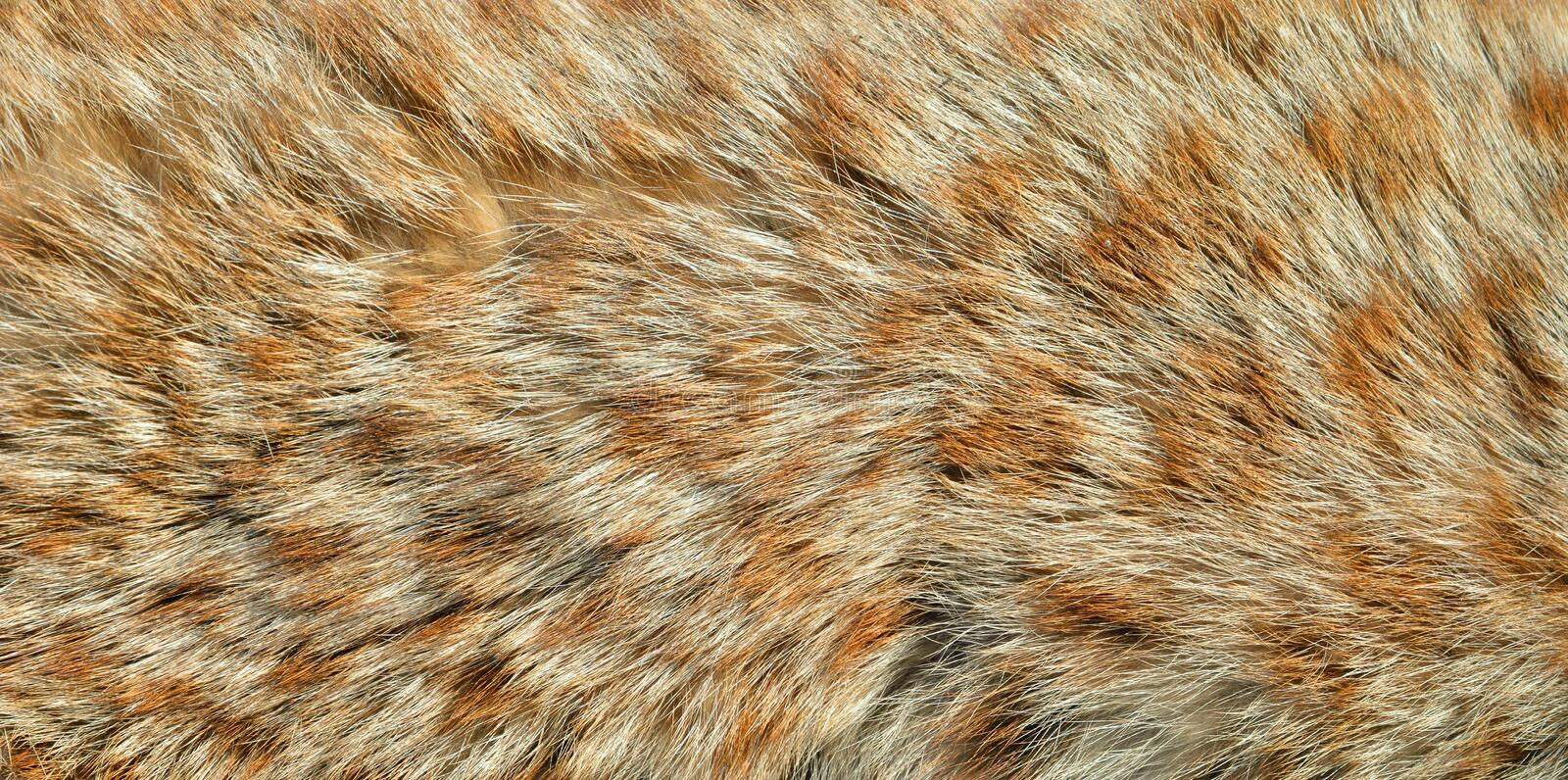 Fur of wild cat royalty free stock images