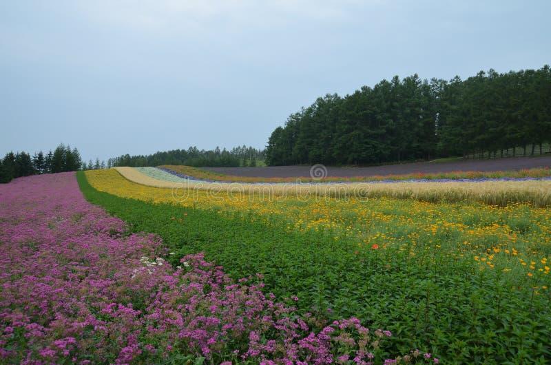 Furano Japão imagem de stock royalty free