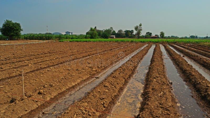 Furchenbewässerung in der Ernteproduktion stockbild