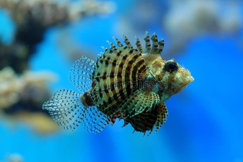 Furchtsame Fische stockfoto