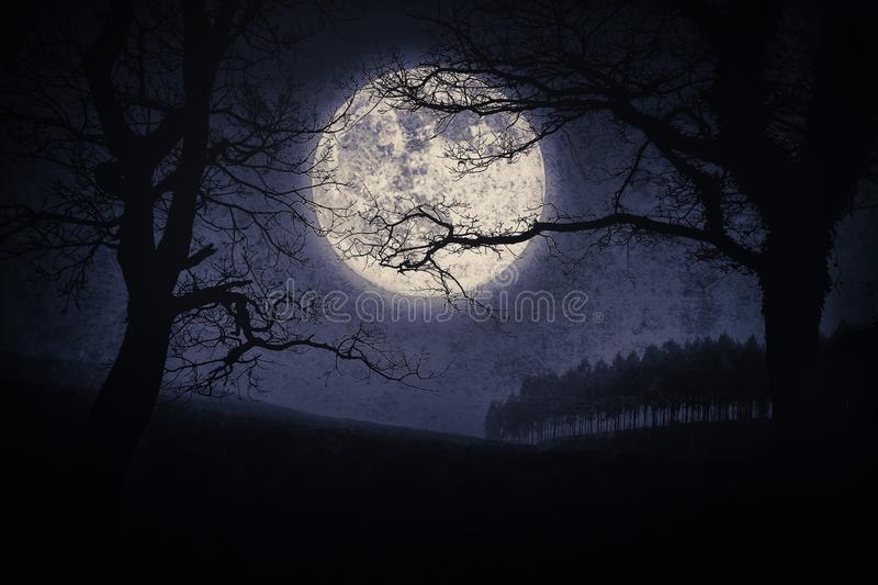 Furchtsame Halloween-Landschaft nachts mit Bäumen und Vollmond lizenzfreie stockfotografie