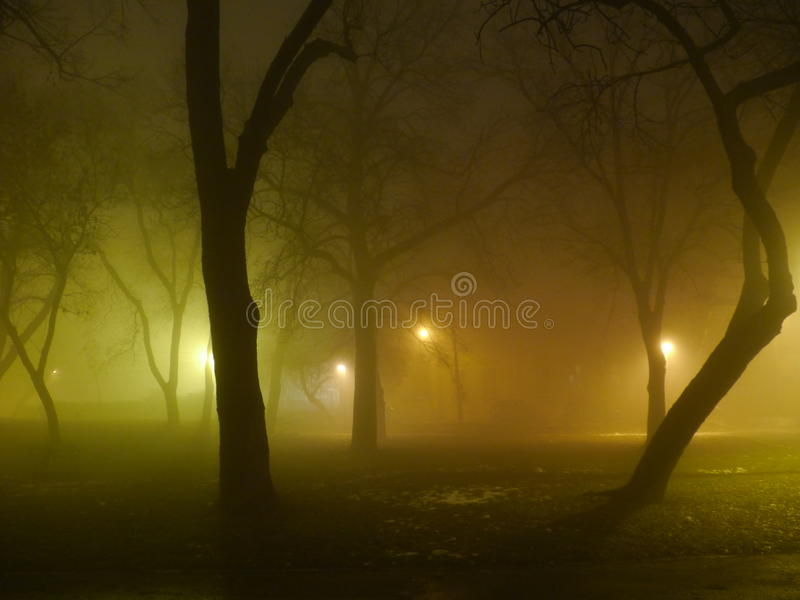 Furchtsame nebelige Nacht im Stadtpark lizenzfreie stockfotografie