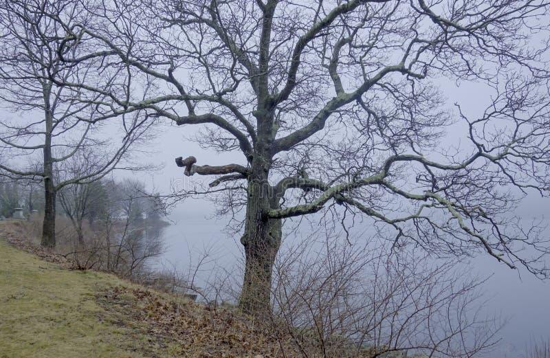 Furchtsamer Baum im Nebel lizenzfreies stockbild