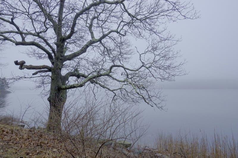 Furchtsamer Baum im Nebel lizenzfreie stockfotografie