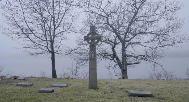 Furchtsamer Baum im Nebel stockfotos