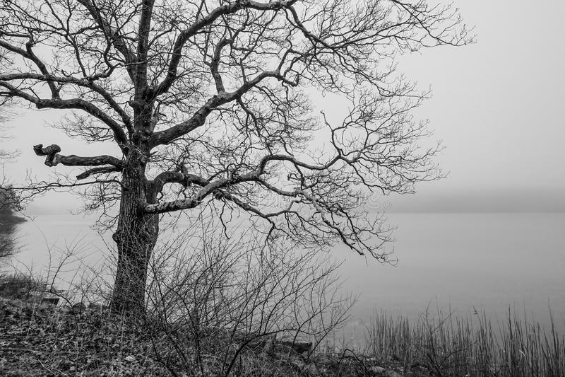 Furchtsamer Baum im Nebel stockbild