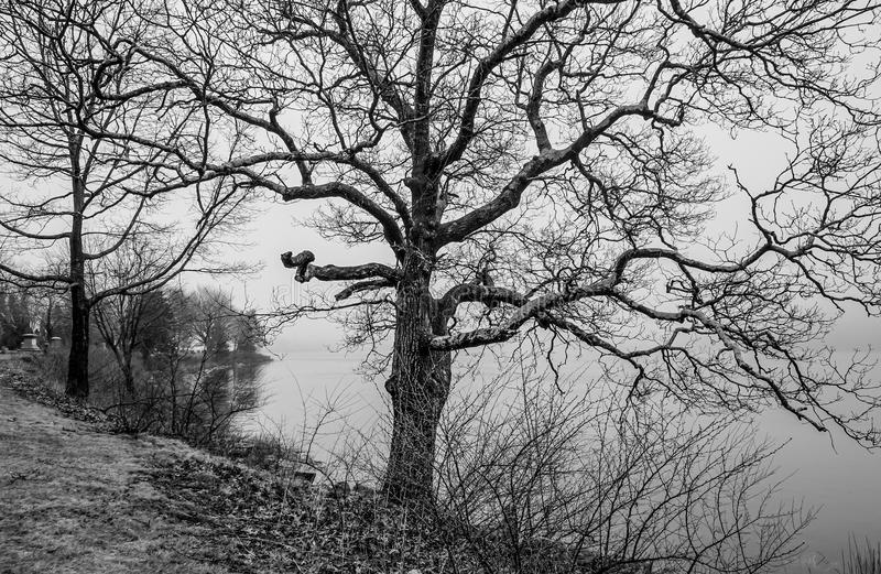 Furchtsamer Baum im Nebel stockfoto