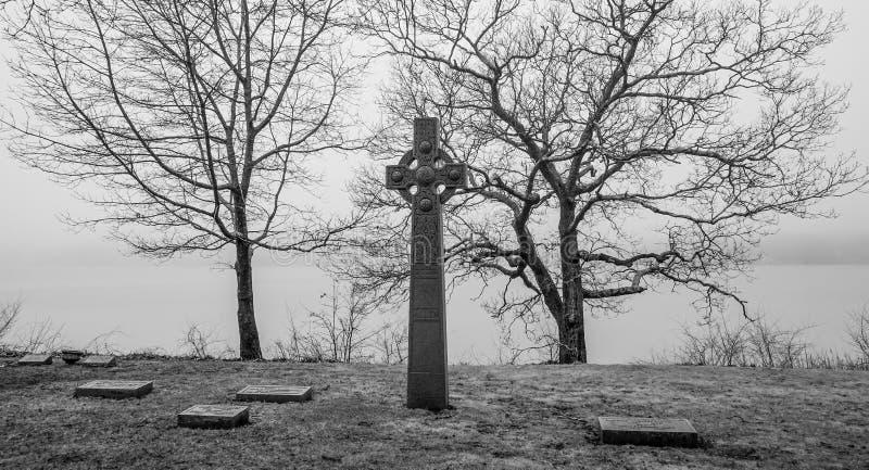 Furchtsamer Baum im Nebel stockfotografie