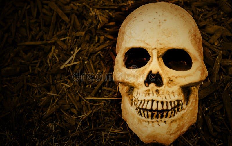 Furchtsamer Halloween-Schädel stockfoto
