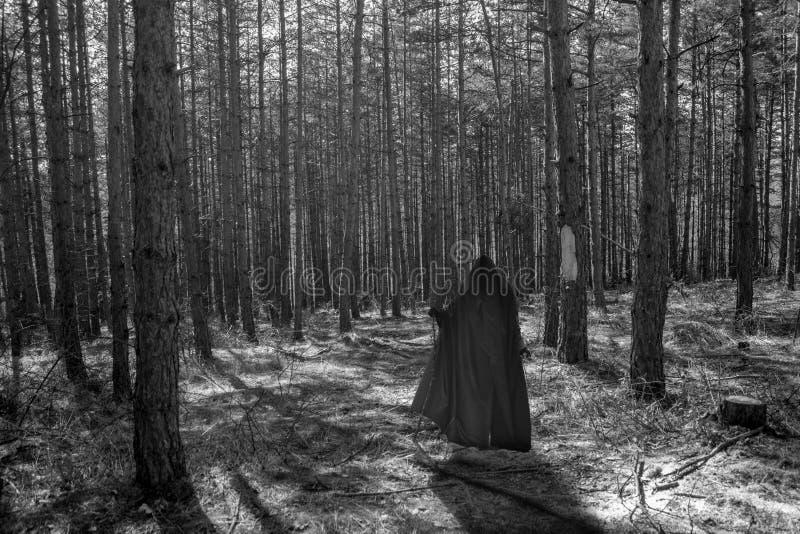 Furchtsamer Wald stockfoto