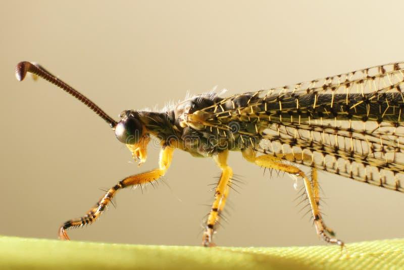 Furchtsames Insekt lizenzfreie stockbilder