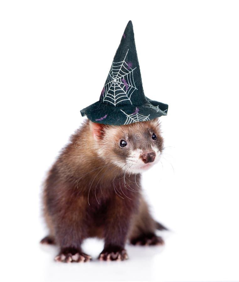 Furet avec le chapeau pour Halloween D'isolement sur le fond blanc photographie stock