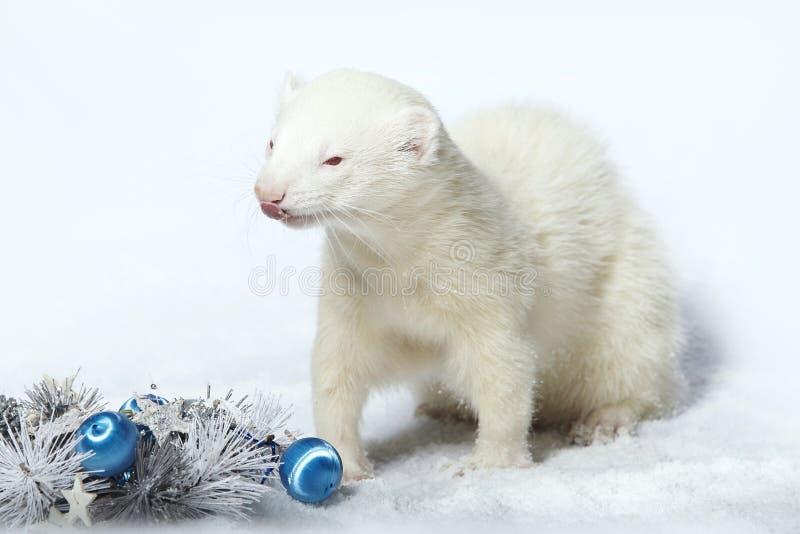 Furet masculin gentil albinos dans le style de Noël avec des décorations photos stock